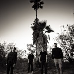 Palms (Image by Travis Shinn)