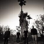 Palms (Image by Travis Shinn)